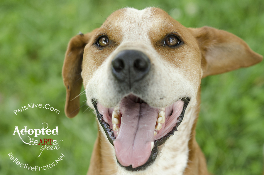 A mixed-breed dog with a big smile on his face, against a green grassy background.
