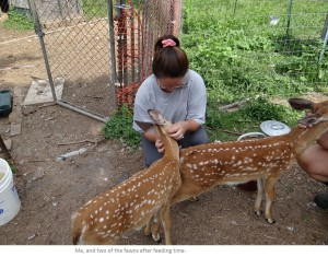 Animal Advocacy Blog Picture