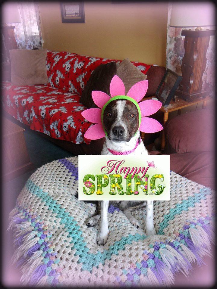 Janet Bovitz Sandefur Rescue Dog Jessie